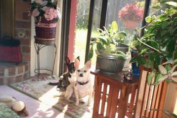 Pepi and Honey - Behaving!!!