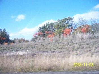 trees - A few trees with leaves changing in south Texas