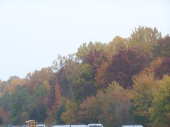 Trees on the way to work - This is such a beautiful sight to see on the way to work