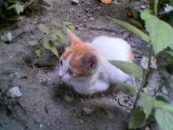 A kitten we had before.. - Her name is 'baboy'