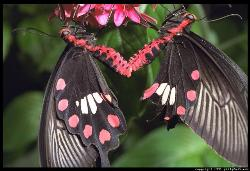 butterfly - its a beauty