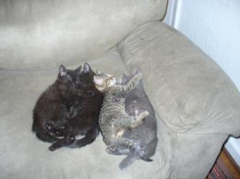 my little baby luvs - look how they used to sleep