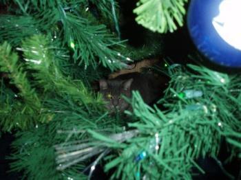 My cat behind our tree - my cat behind our tree