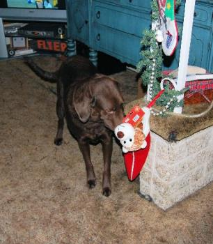santa came early - checking out her stocking