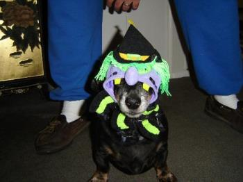 Cody at Halloween - Photo of our dog on Halloween. He was so funny and had no clue what to do.