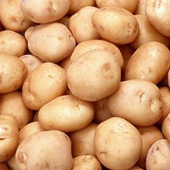 Potato. - Potato....