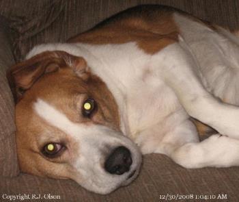 Buster - I woke him up early morning as I was myLotting.