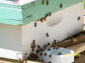 Some Of My Dad's Honeybees - Some of my dad's honeybees.