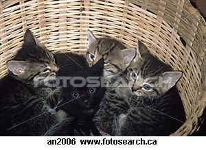 Little basket of kittens - I very cute basketful of very cute and cuddly kittens