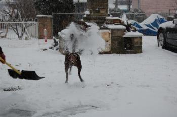 catchin a shovel full - she loves gettin the snow