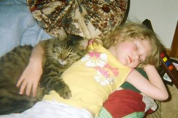 sleeping - Brooke and Shop Kitty taking a nap