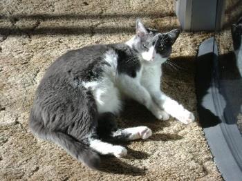 Izzy - my cat izzy