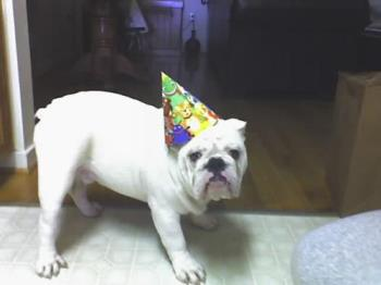 My baby dog  - He was celebrating my birthday