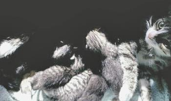 Whoopi and Her Kittens - image of Whoopi and her kittens