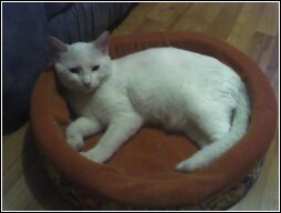 pica..my cat - this is pica my cat that had a uniary problem but getting to the vet immediately..fixed the problem..youpeeeeeee