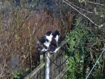Fence sitters - Poppy sitting on the fence post right behind Felix. They both seem to be intent on something.