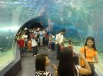 manila ocean park - one of the best in manila