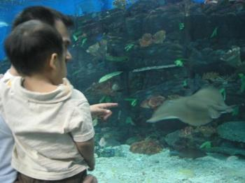 manila ocean park - ocean park