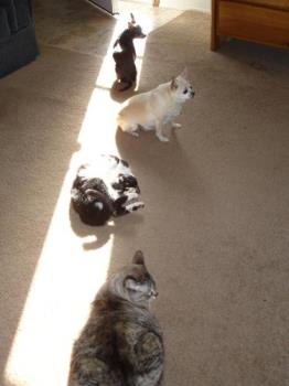 Sun Beam - My pets like to sit in the sun beam coming in the door.
