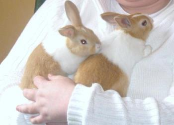 Angel and Sweetheart - The most adorable Grandbunnies anyone ever had! lol xxx
