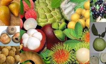 fruits...^_^ - clockwise from top left: tesia, atis(sweetsop; the green one), forgot the name of the yellow one, duhat, bayabas(guava), rambutan(which means hairy one; those spikes are actually soft), sampalok(tamarind;the curved brown one), lanzones, chico, and kaimito(star apple).