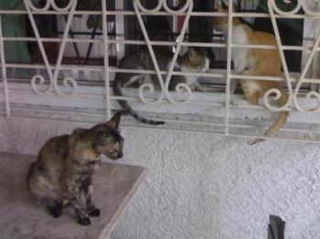 my cats - these are my cats. They're outsite at the terrace waiting for their food to be served.