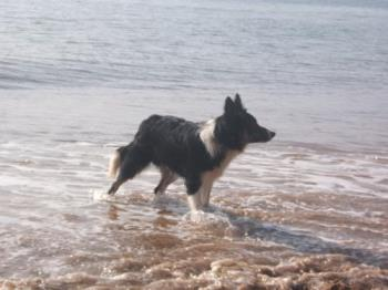 Ziggy at the beach................................ - Ziggy at the beach.....................................