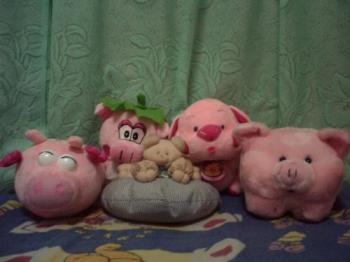 pig collection - some of my pig stuffed toys