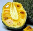 jackfruit - it is nutritious fruit