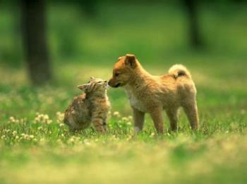 cats love dogs and vice versa - ain't that the cutest thing you ever saw?