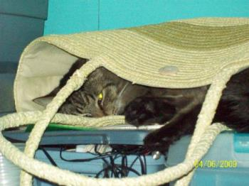Ding Ding in hiding - I couldn't find Ding Ding for the life of me, then I turned and caught sight of something dark in the tote bag and jumped sky high. He loves to sleep in strange places.
