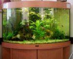 aquarium - Lovely