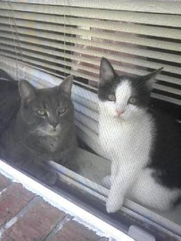 My maine cat and gucci as well - This is a picture of both of my cats. I love them to death tell me what you think about them. [em]lol[/em]