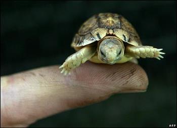 tortoise - small tortoise
