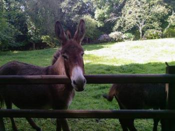 Donkey - As Innocent as they appear?