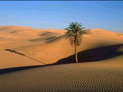Deserts - All alone in a lonesome desert is no more than a nightmare.