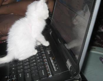 kitten's attention on moving cursor  - taken a few hours ago, kitten likes the moving cursor