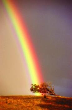 rainbow - A rainbow is a variously colored bow-shaped optical illusion that might appear up in the sky on a rainy day.
