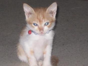 kitten - kitten that recently died