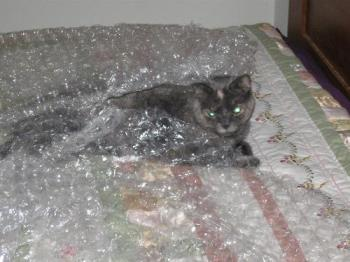 Ashley Under Wraps - Ashley sleeping under bubble wrap
