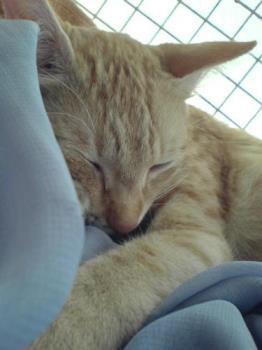 My cat papa - My cat papa sleeping