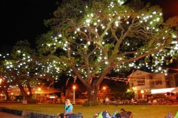 tree - a tree lighted up for the Christmas season