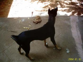 Pet - Preiti is our seventh dog. She is a stray but worth her weight in gold!