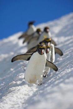 Penguin - lovely penguin