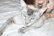 cat - This was the sweetest cat ever. Boy, I sure do miss him!