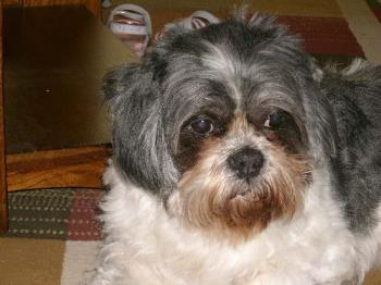 """Cody - Just a picture of my pet """"Cody"""""""