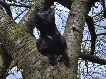 "Shadow - This is Shadow up a tree saying ""Was that a bird that I just saw?"""