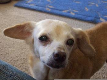 """Picture of the """"real"""" Polly, she was about 15 year - Picture of the """"real"""" Polly, she was about 15 years old in this picture."""