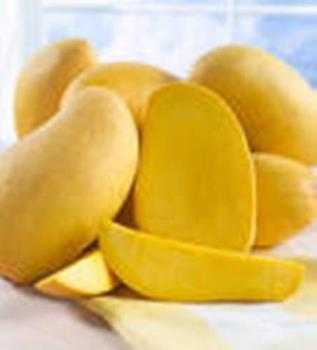ripe yellow mangoes from the philippines - golden yellow mangoes