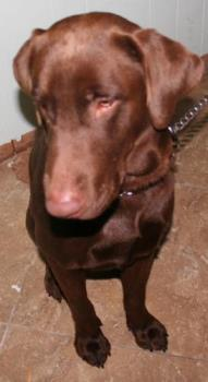 Brownie - Yeah, I'm leaving the shelter!!!